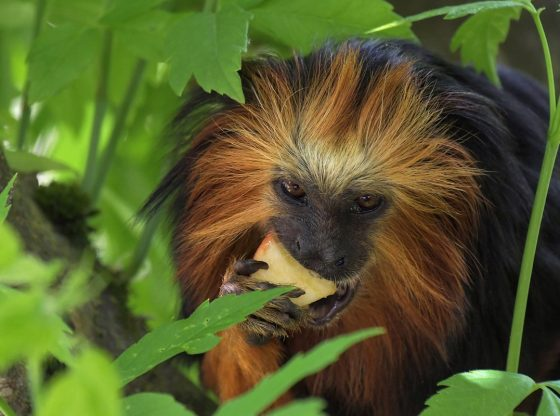 Monos con garras